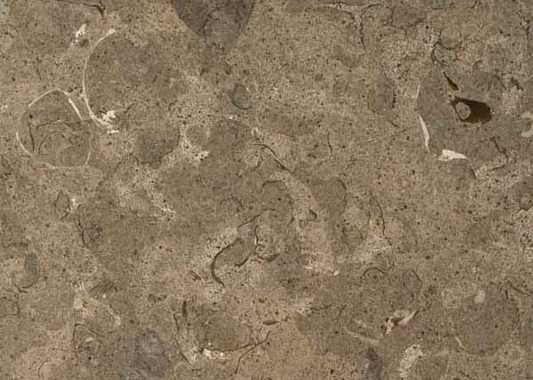 fossil gray marble